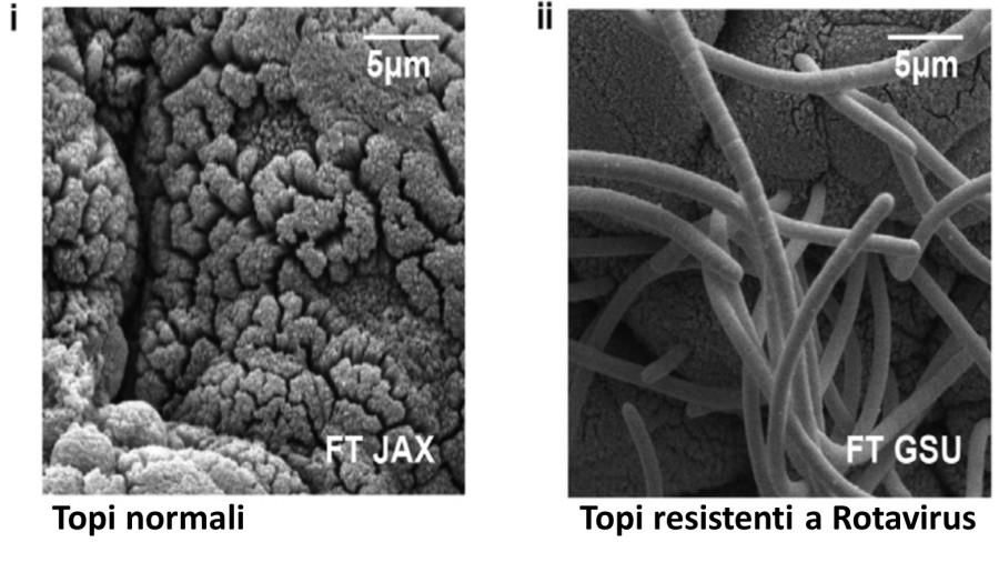 Intestino microbiota